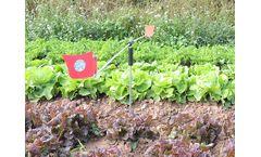 Eolo - Garden Scarecrow
