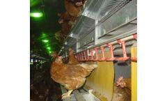 Salmet - High Rise 3 Aviary Systems
