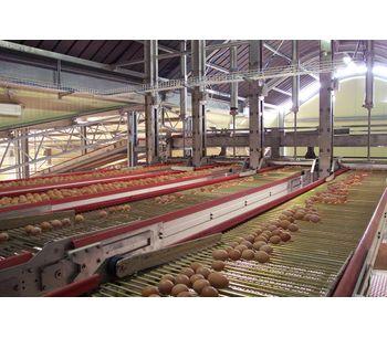 Flexy - EGG WAY - Egg Conveyor