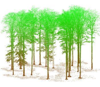 3D Forest and Landscape Modelling-3