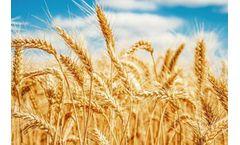 Five Design Principles of Rice Color Sorter Technology