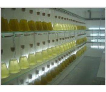 Vannamei - Phytoplankton (Algae) Culture Training Courses