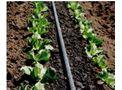 Agridrip - Drip/Microirrigation Systems