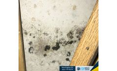What Temperature Does Mold Grow in a House?