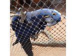 AISI 316 stainless steel aviary mesh / bird enclosure netting