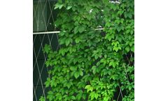 Stainless Steel Wire Rope Mesh Plant Climbing Trellis