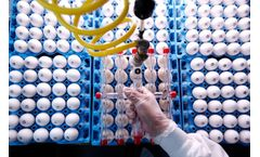 Avian Vaccine Services