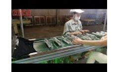 Three Color Glass Bottle Screen Printing with UV Curing / OS-767-3C Video