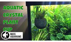 Senzeal Crystal Glass Aquatic Plant Cup - Video