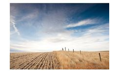 Radicle - Conservation Cropping  Services