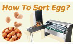 How to grade eggs? Egg grading sorting machine