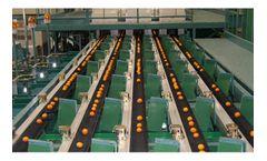 Model PK Type - Tray Conveyor Sorter