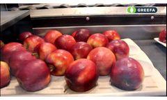 Greefa SmartPackr at Royal Fruitmasters Video
