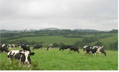 Feed Formulation Software for Dairy Cattle