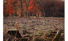 UPDATE: Fitness check of the EU Timber Regulation