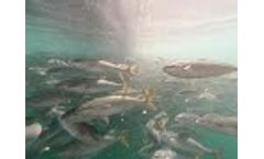 Underwater during feeding - Video