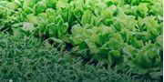 Bio Growth Stimulants
