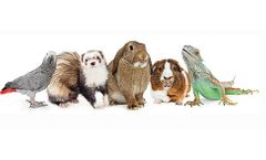 Sweet PDZ Uses for Rabbits, Small Animals, Reptiles & Birds