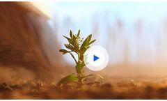 Paradigm Arylex - Active Herbicide