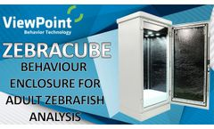 Zebracube - Adult fish monitoring - Video