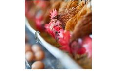AnimalSoft - Egg Production Software