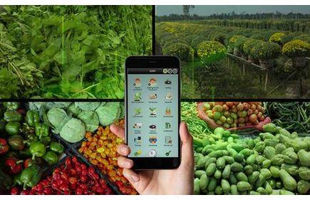 Small Farmers Agri-business Consortium – Haryana  - Case Study