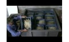 Winus thermal shock tank for ASPARAGUS - Video