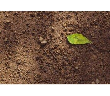 How Satellite Imagery is Helping to Transform Soil Carbon Monitoring for Growers