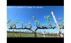 Spur pruned - Bud burst - Video
