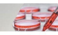 Karin Baron Shares Asian Market Regulation Information at Exporting Chemicals and Hazardous Material