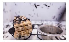 Insect-Engineers - Breeding Services