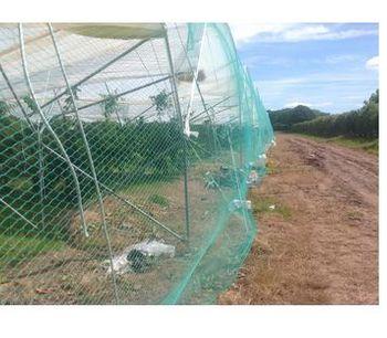 XL - Anti Bird Netting