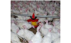 Evoteck - Feeding System for Turkeys