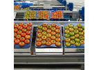 Ingeniería - Vegetables and Leafy Processing Lines Machine