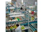 Grapes Processing Lines Machine