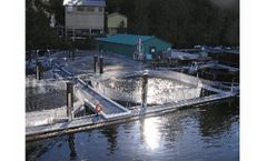 Non-Chemical Algae Control Solutions for Hatcheries & Fish Farms Industry