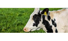 Scottish startup approach Integrated Graphene to develop a Bovine Tuberculosis sample preparation device - Case study