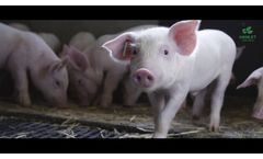 HP 300 - Results from 20 years of feeding trials are the proof - Video