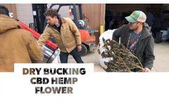 Dry Bucking CBD Hemp Flower - Video