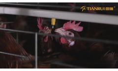 Chinese Poultry Equipment Factory Chicken Cage System - RETECH Farming TIANRUI Chicken Cage - Video