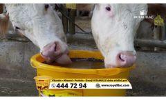 Vitamolix Ruminant - Licking Buckets - Video