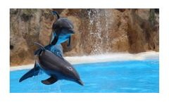 Water treatment solutions for zoos industry