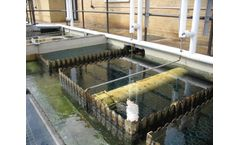 Algae control products for industrial and municipal applications