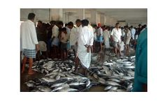 Fisheries Economics, Processing, Marketing and Trade