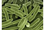 Removing Pathogens Services