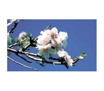Irrigation solutions for Almond Crops - Agriculture - Crop Cultivation