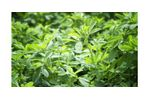 Irrigation solutions for alfalfa crops - Agriculture - Crop Cultivation
