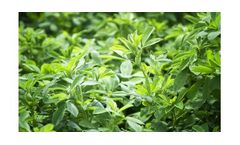 Irrigation solutions for alfalfa crops