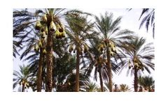 Irrigation solutions for Date crops