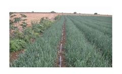 Irrigation solutions for Onion crops